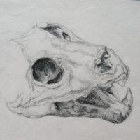 Crâne, amphi de morpho des Beaux-arts de Paris