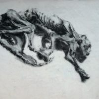 Momie de chat, amphi de morpho des Beaux-arts de Paris