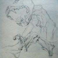 Momie de panthère, amphi de morpho des Beaux-arts de Paris